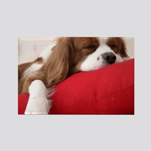 Spaniel pillow Rectangle Magnet