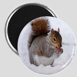 squirrel snow peace joy Magnets