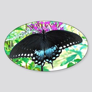 Spicebush Swallowtail Butterfly, Ca Sticker (Oval)
