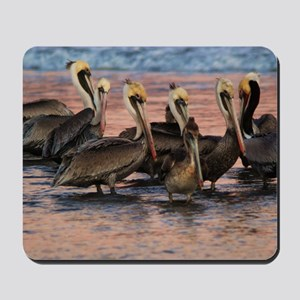 Brown Pelicans Santa Barbara Pier Mousepad