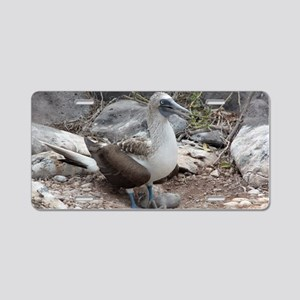 Blue-footed Booby with Baby Aluminum License Plate