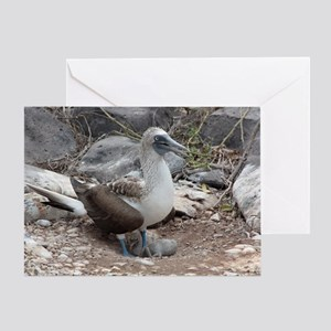 Blue-footed Booby with Baby Galapago Greeting Card