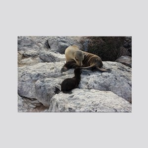 Mother and Baby Sea Lion Galapago Rectangle Magnet