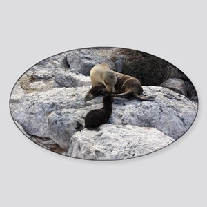Mother and Baby Sea Lion Galapagos Sticker (Oval)