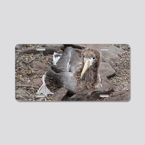 Young Albatross Galapagos Aluminum License Plate