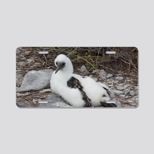 Young Blue-footed Booby Gal Aluminum License Plate