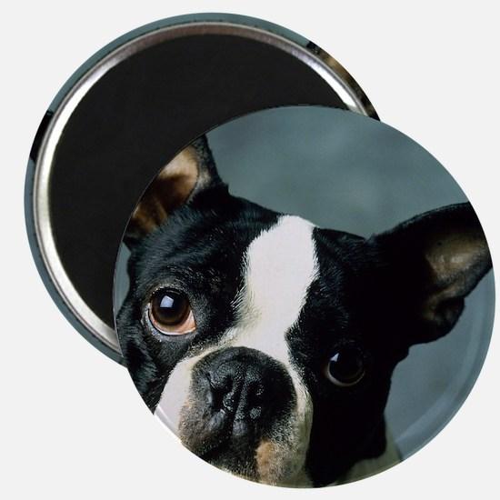 BT Portrait pillow Magnet