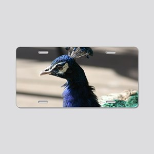 Lucky Peacock Feathers Aluminum License Plate