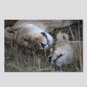 lioness and cub 1 Postcards (Package of 8)