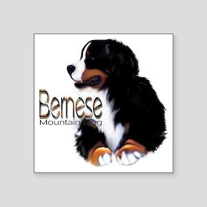 "Bernese Male Square Sticker 3"" x 3"""