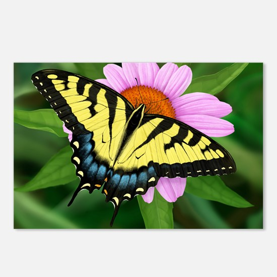 Swallowtail Postcards (Package of 8)