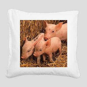 three piglets Square Canvas Pillow