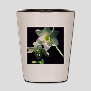 R1-05487-0006 Shot Glass
