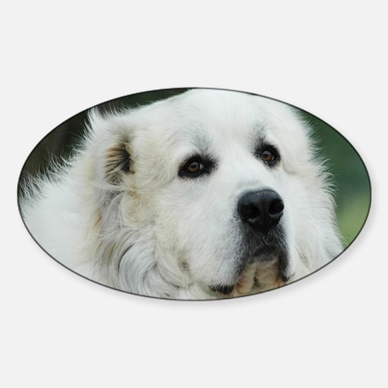 Great pyr Sticker (Oval)