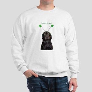 Irish lab Sweatshirt