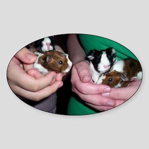 Baby guinea pigs Sticker (Oval)