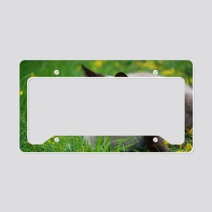 Ready to attack! License Plate Holder