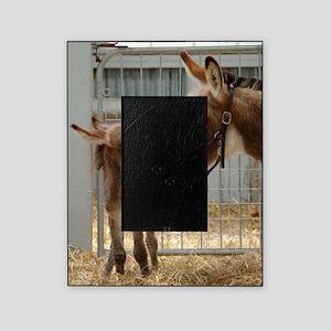 Newborn Donkey Foal Picture Frame