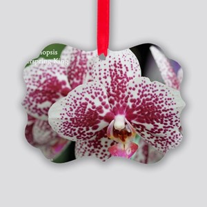 Phal. Everspring King Picture Ornament