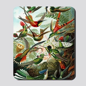 Hummingbirds (Trochilidae) by Ernst Haec Mousepad