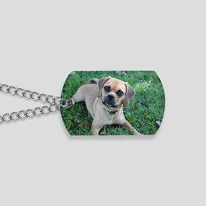 IMG_4116_a Dog Tags
