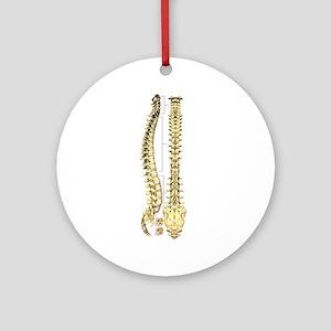 AP-Lat Spine Ornament (Round)