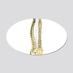 AP-Lat Spine Wall Decal