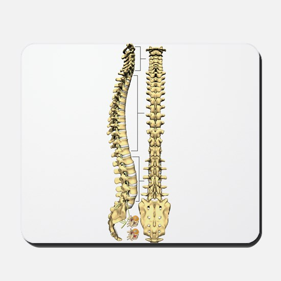 AP-Lat Spine Mousepad