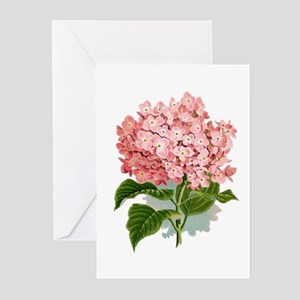 Pink hydragea flowers Greeting Cards