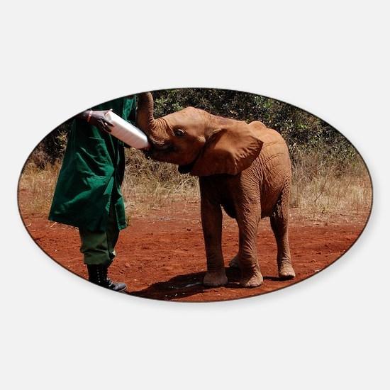 Baby Elephant2 Sticker (Oval)