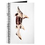 Caribbean Roughshark shark Journal