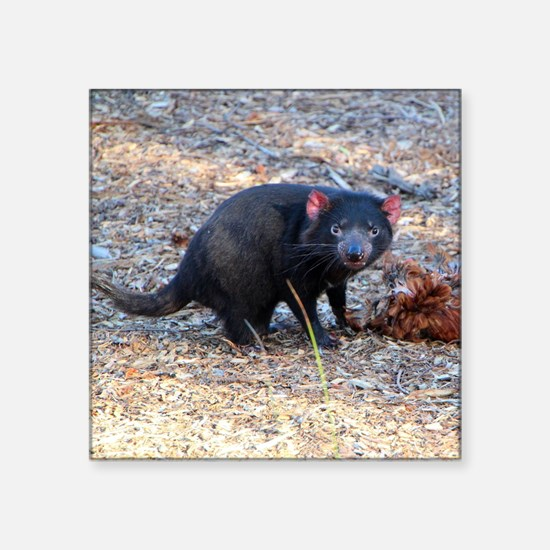 "Hungry Tasmanian Devil Square Sticker 3"" x 3"""