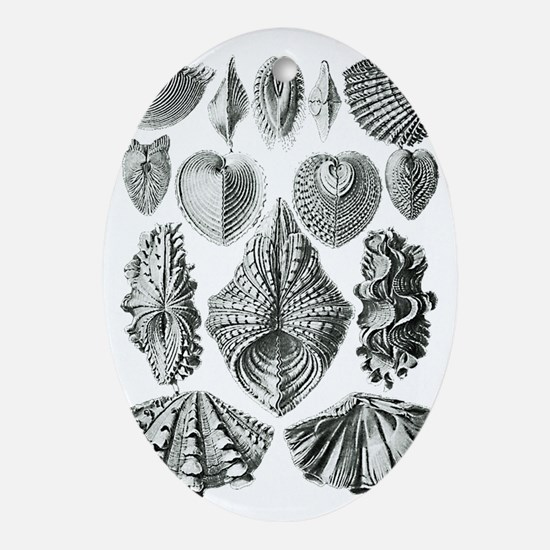Shell Fossils Oval Ornament