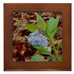 Bluebells Framed Tile