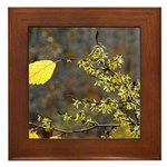 Witch Hazel Framed Tile