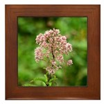 Joe-pye Weed Framed Tile