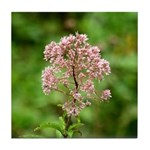 Joe-pye Weed Tile Coaster