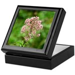 Joe-pye Weed Keepsake Box
