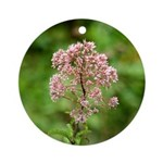 Joe-Pye Weed Ornament (Round)