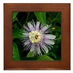 Passionflower Framed Tile