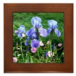 Iris and Antique Roses Framed Tile