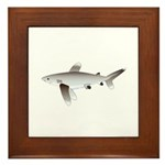 Oceanic Whitetip Shark Framed Tile