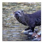 River Otter Square Car Magnet 3