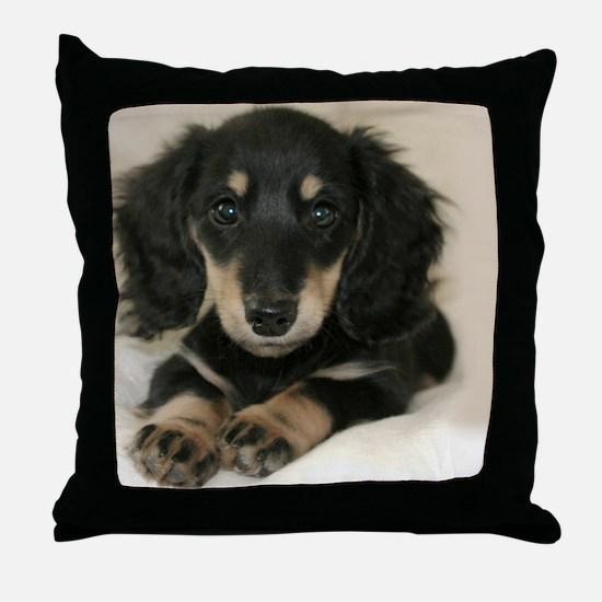 long hair black doxie 16x12 Throw Pillow