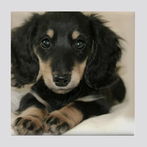 long hair black doxie 16x12 Tile Coaster