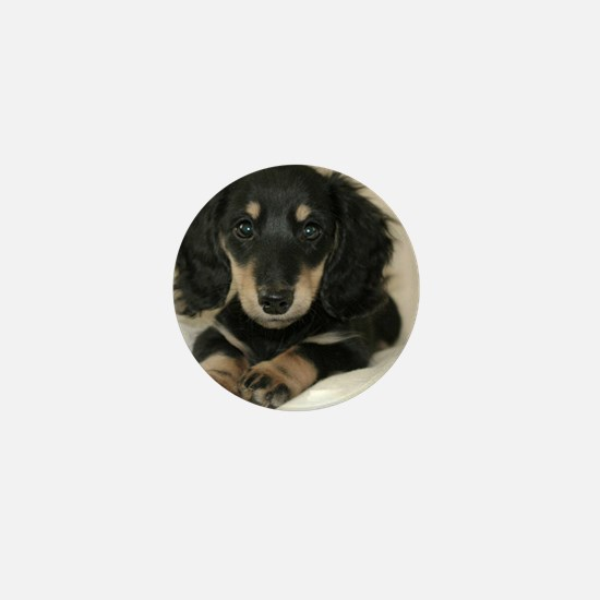 long hair black doxie 16x12 Mini Button