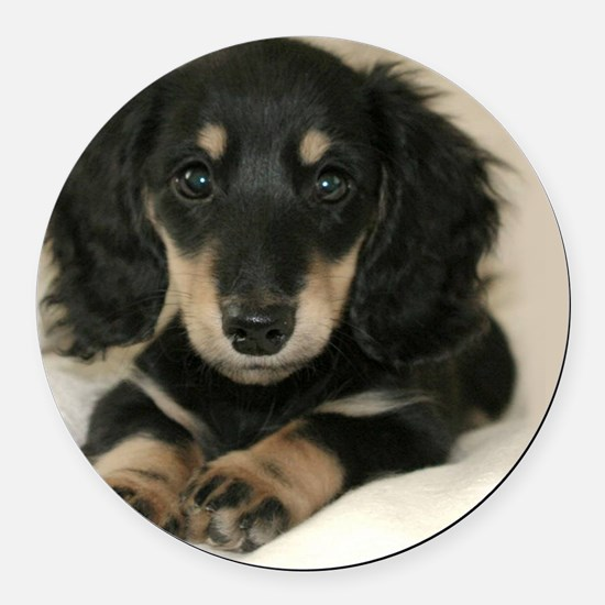 long hair black doxie 16x12 Round Car Magnet