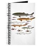 Deep Sea Sharks School 2 c Journal