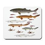 Deep Sea Sharks School 2 c Mousepad
