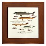 Deep Sea Sharks School 2 C Framed Tile